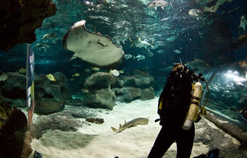 Dive Experiences