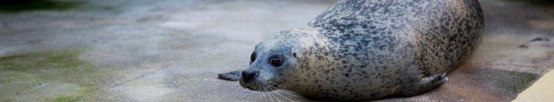 Meet the Seals!