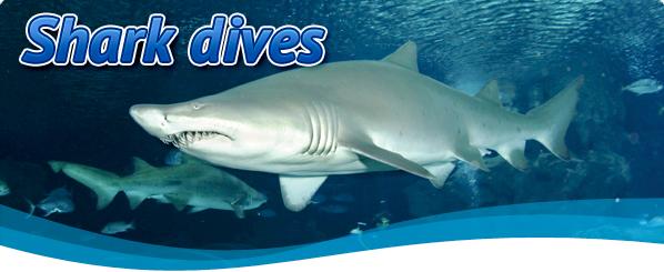 DSW-shark