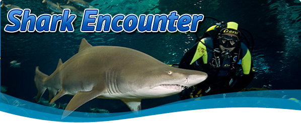 shark-encounter