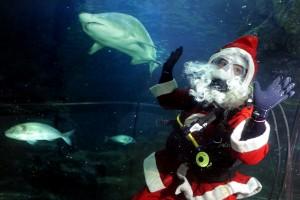 Diving Santa Sharks Scotland
