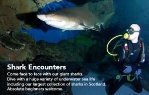 DSW_Shark_02