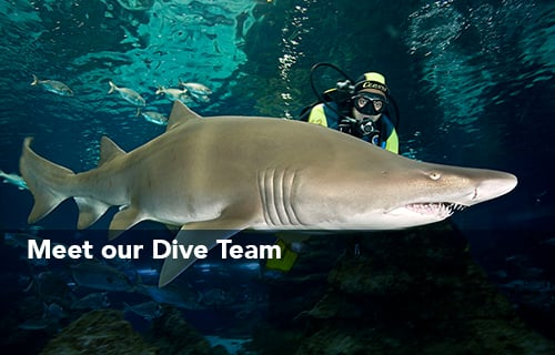 Meet The Divers