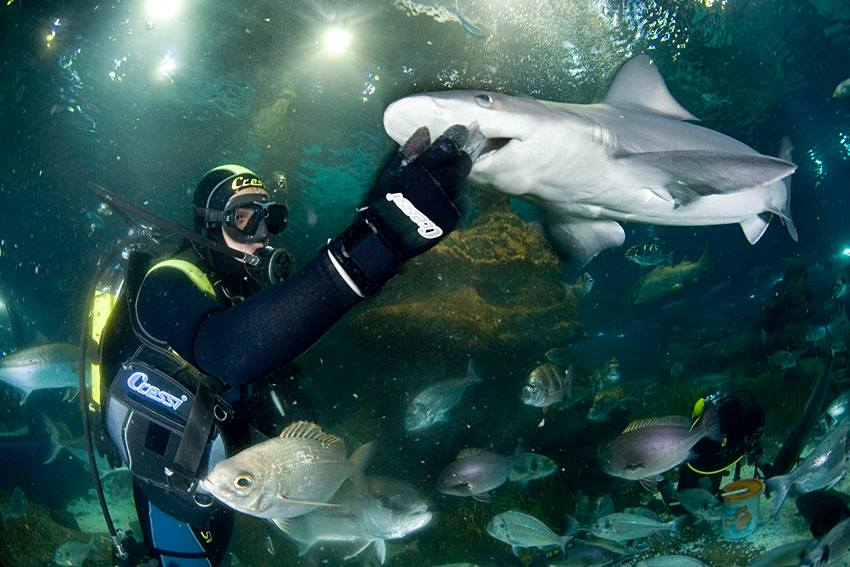 Deep Sea Divers With Sharks