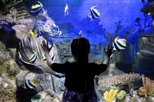 Deep Sea World October Half Term