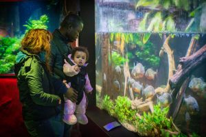 10 Reasons Why Toddlers Will Love Deep Sea World