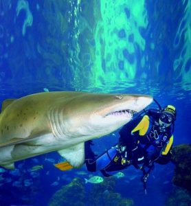 Swimming with Sharks at Deep Sea World