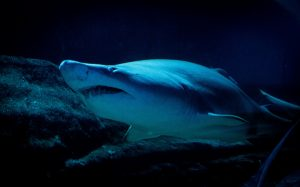 9 Things You Didn't Know About Sharks