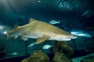 Shark Week at Deep Sea World
