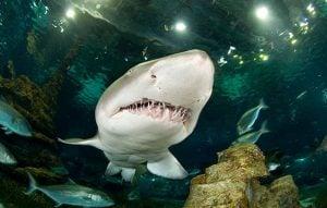 Shark Identification Guide