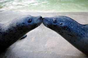 A Fishy Love Story: Courtship in Marine Animals