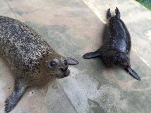 Meet our seals