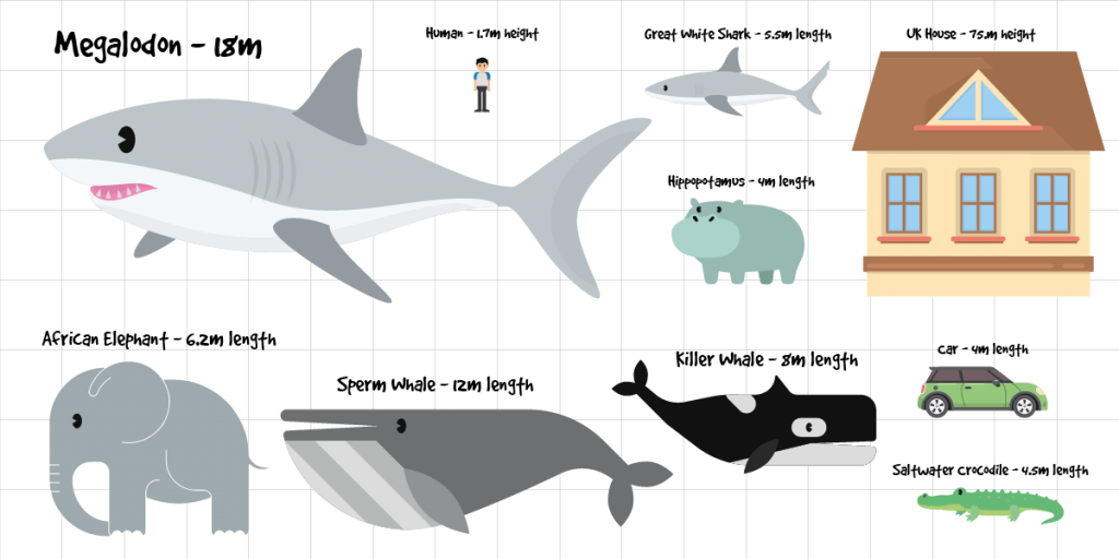 megalodon scale chart