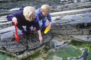 boys looking in rock pools