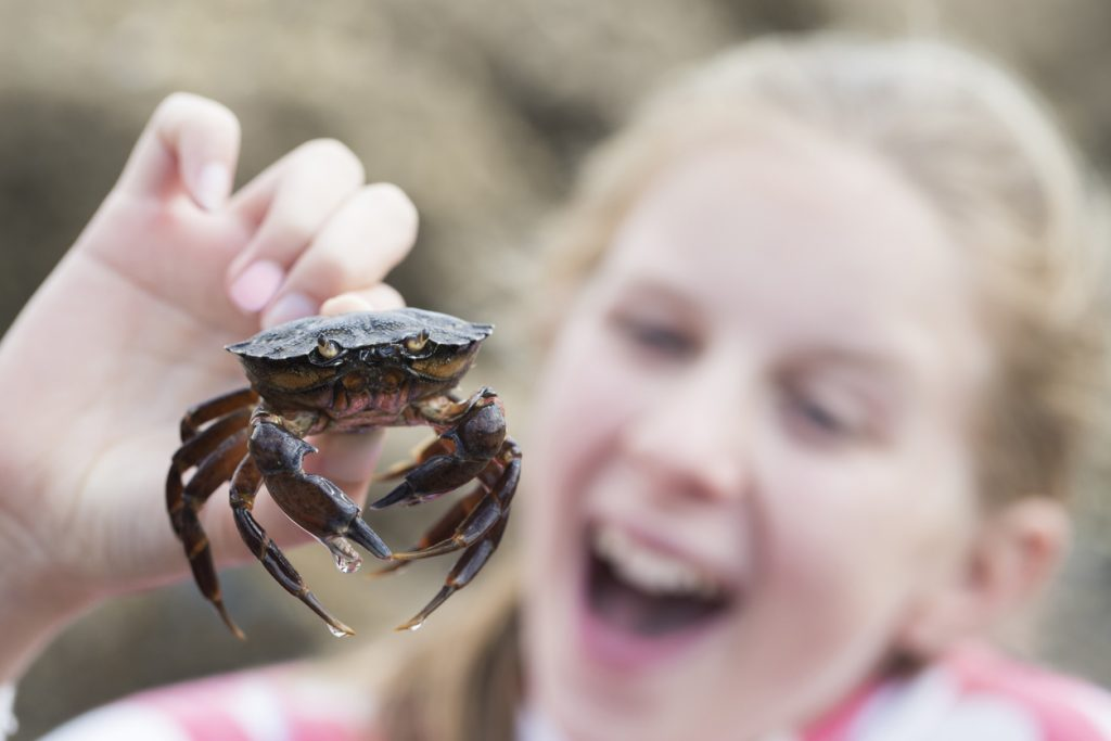 girl holding a crab