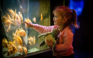 Friends of Deep Sea World Competition!