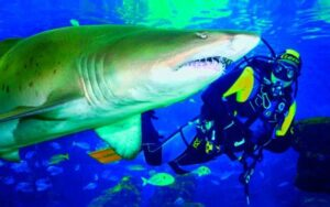 10 Jawesome Gifts for any Shark Lover